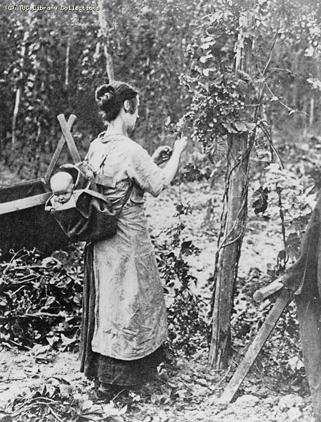 Hop picking, late 19th century